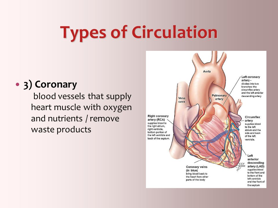 Types of Circulation 3) Coronary blood vessels that supply heart muscle with oxygen and nutrients / remove waste products