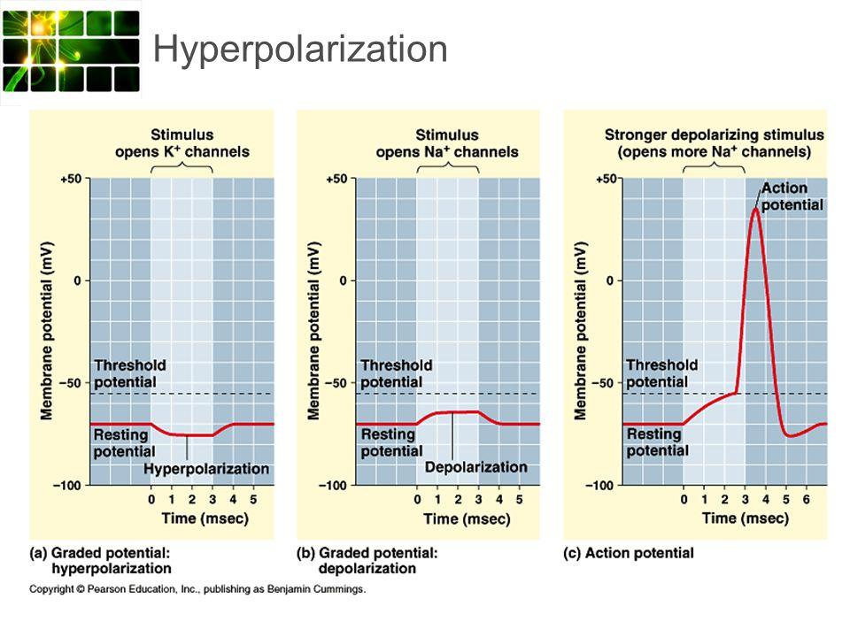 Hyperpolarization