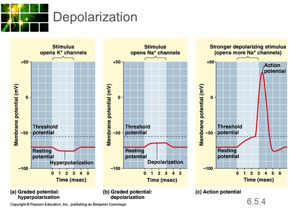 Depolarization