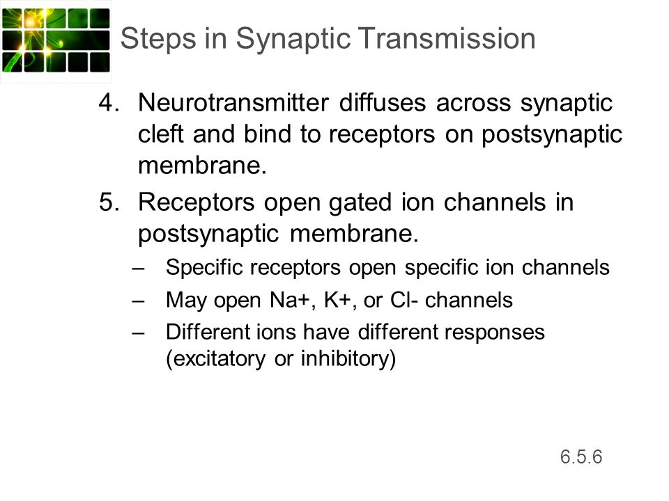 6.5.6 Steps in Synaptic Transmission 4. Neurotransmitter diffuses across synaptic cleft and bind to receptors on postsynaptic membrane. 5. Receptors o