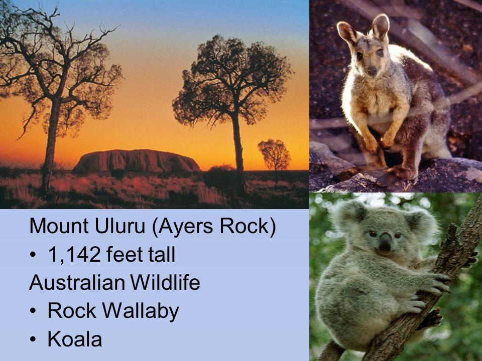 Mount Uluru (Ayers Rock) 1,142 feet tall Australian Wildlife Rock Wallaby Koala