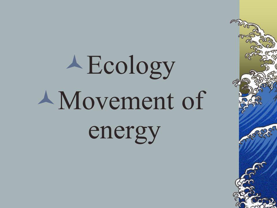 Ecology Movement of energy