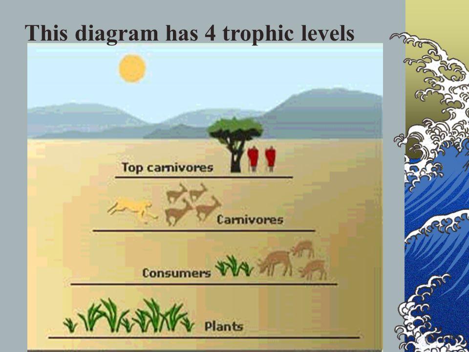 This diagram has 4 trophic levels