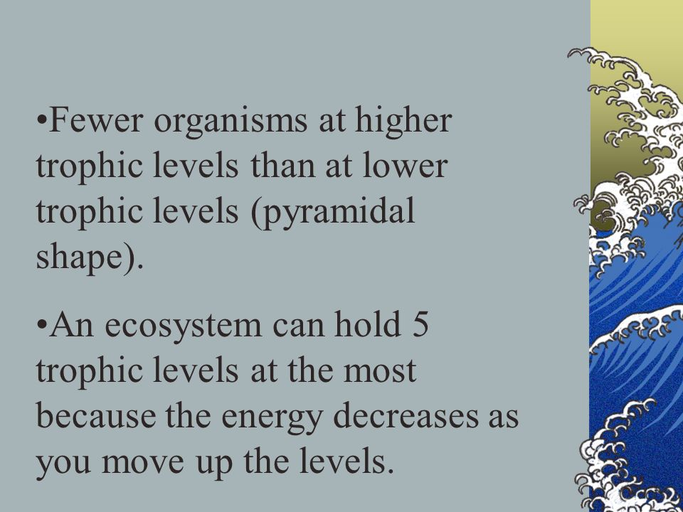 Fewer organisms at higher trophic levels than at lower trophic levels (pyramidal shape). An ecosystem can hold 5 trophic levels at the most because th