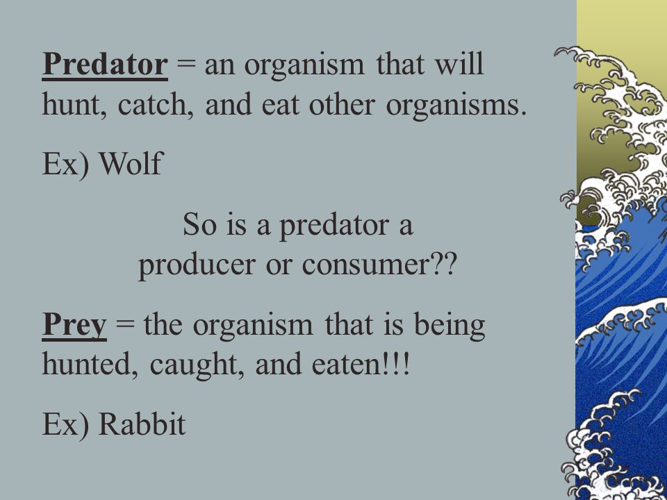 Predator = an organism that will hunt, catch, and eat other organisms. Ex) Wolf So is a predator a producer or consumer?? Prey = the organism that is