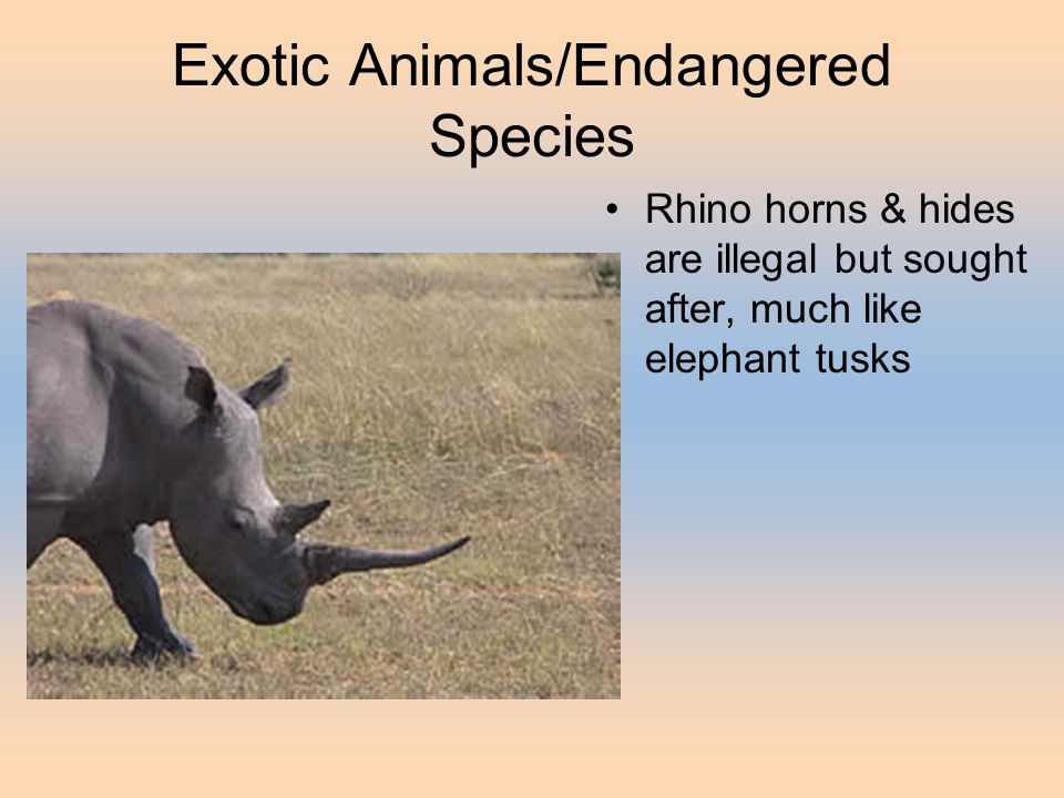 Exotic Animals/Endangered Species Rhino horns & hides are illegal but sought after, much like elephant tusks