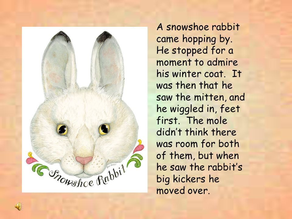 A snowshoe rabbit came hopping by. He stopped for a moment to admire his winter coat. It was then that he saw the mitten, and he wiggled in, feet firs