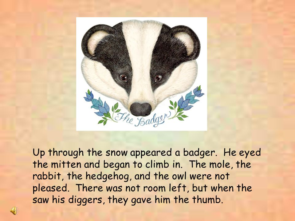 Up through the snow appeared a badger. He eyed the mitten and began to climb in. The mole, the rabbit, the hedgehog, and the owl were not pleased. The