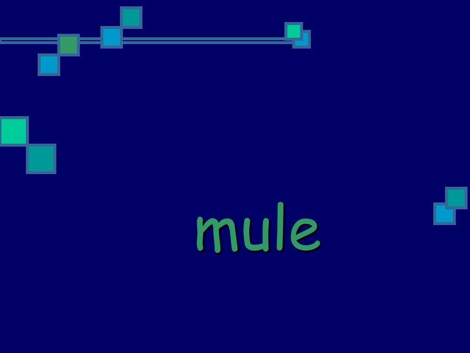 rule truth glue tube knew