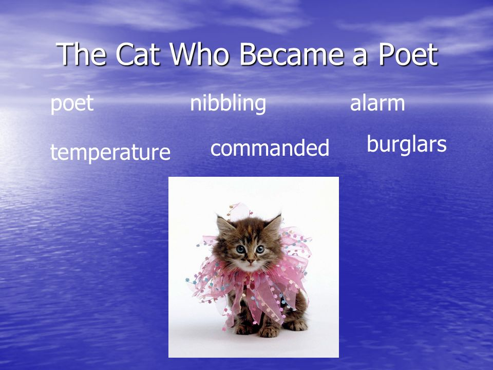 The Cat Who Became a Poet poetnibbling alarm temperature commanded burglars