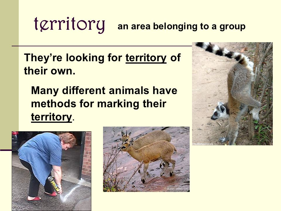 territory an area belonging to a group Theyre looking for territory of their own.