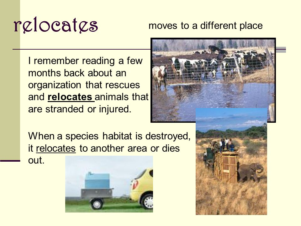 relocates moves to a different place When a species habitat is destroyed, it relocates to another area or dies out.
