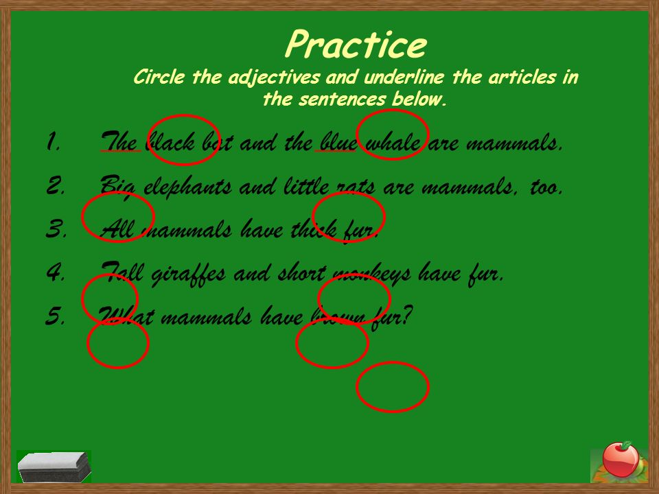 Practice Circle the adjectives and underline the articles in the sentences below. 1.The black bat and the blue whale are mammals. 2.Big elephants and