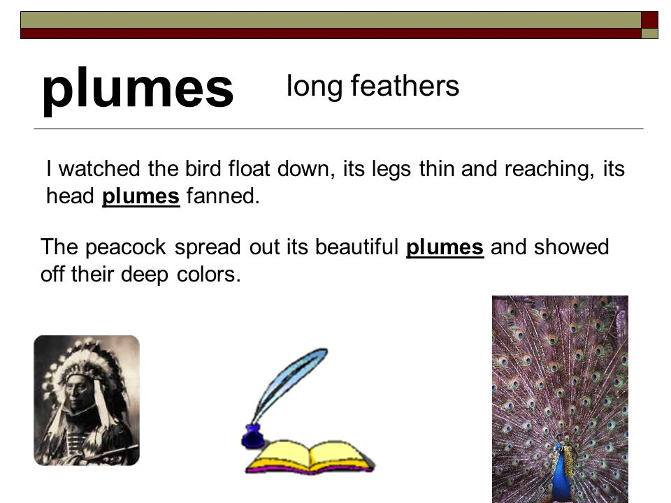 plumes long feathers I watched the bird float down, its legs thin and reaching, its head plumes fanned.