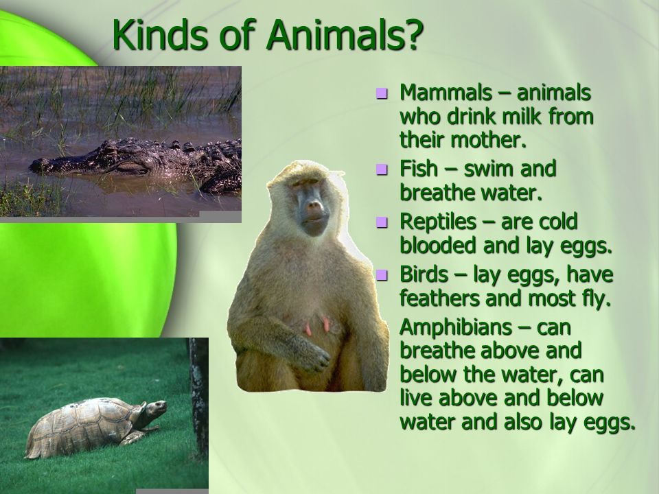 Animals Unit 1 Theme