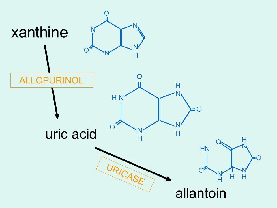 uric acid allantoin N N N O H H H O O H N N H O N N H H O H N O H xanthine N N NHNH N O O ALLOPURINOL URICASE