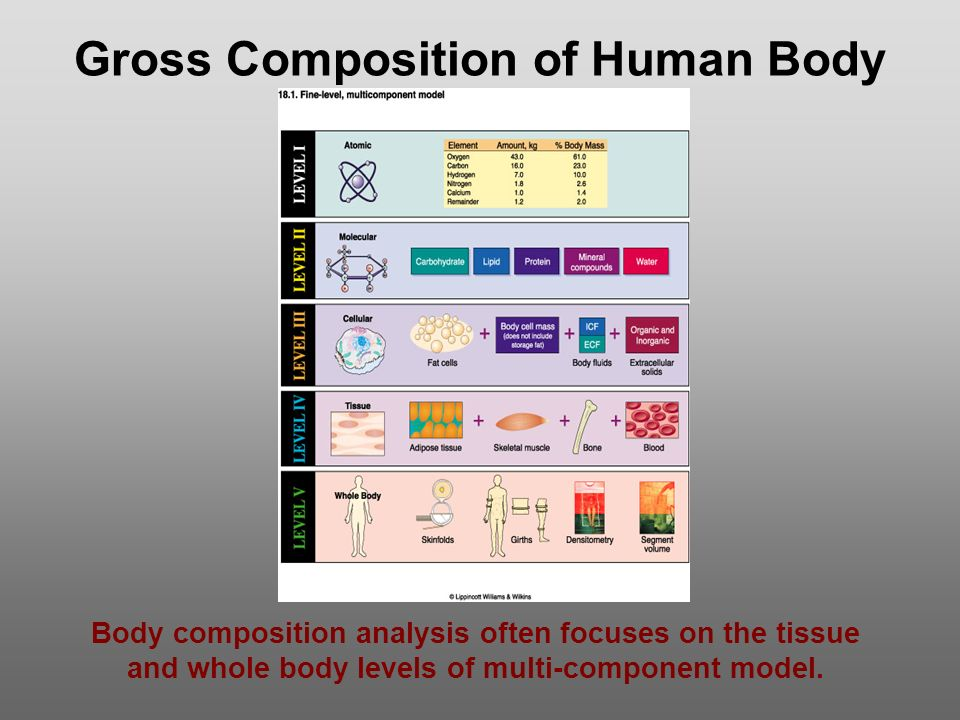 Gross Composition of Human Body Body composition analysis often focuses on the tissue and whole body levels of multi-component model.