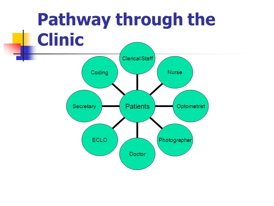 Pathway through the Clinic Patients Clerical StaffNurseOptometristPhotographerDoctorECLOSecretaryCoding
