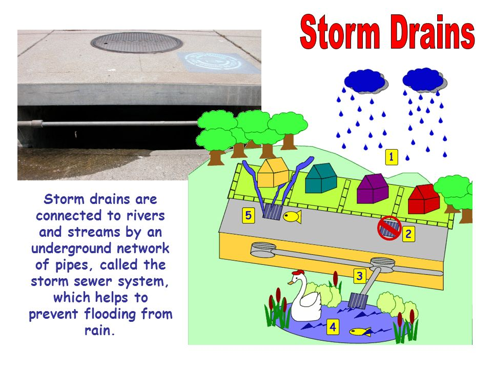 Storm drains are connected to rivers and streams by an underground network of pipes, called the storm sewer system, which helps to prevent flooding fr