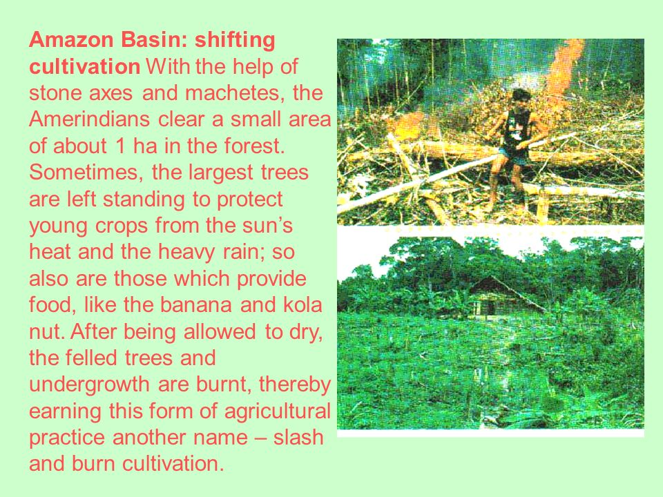 1> Yanomami Indians work at putting out a fire that blazed out of control as they burned land for cultivation.