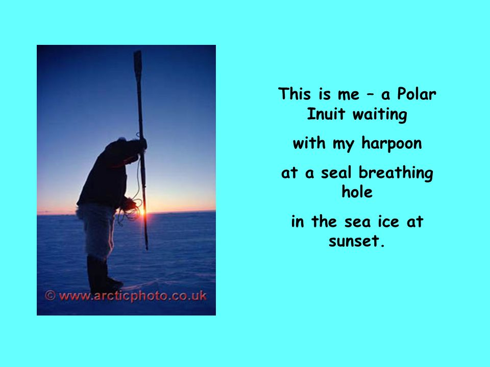 This is me – a Polar Inuit waiting with my harpoon at a seal breathing hole in the sea ice at sunset.