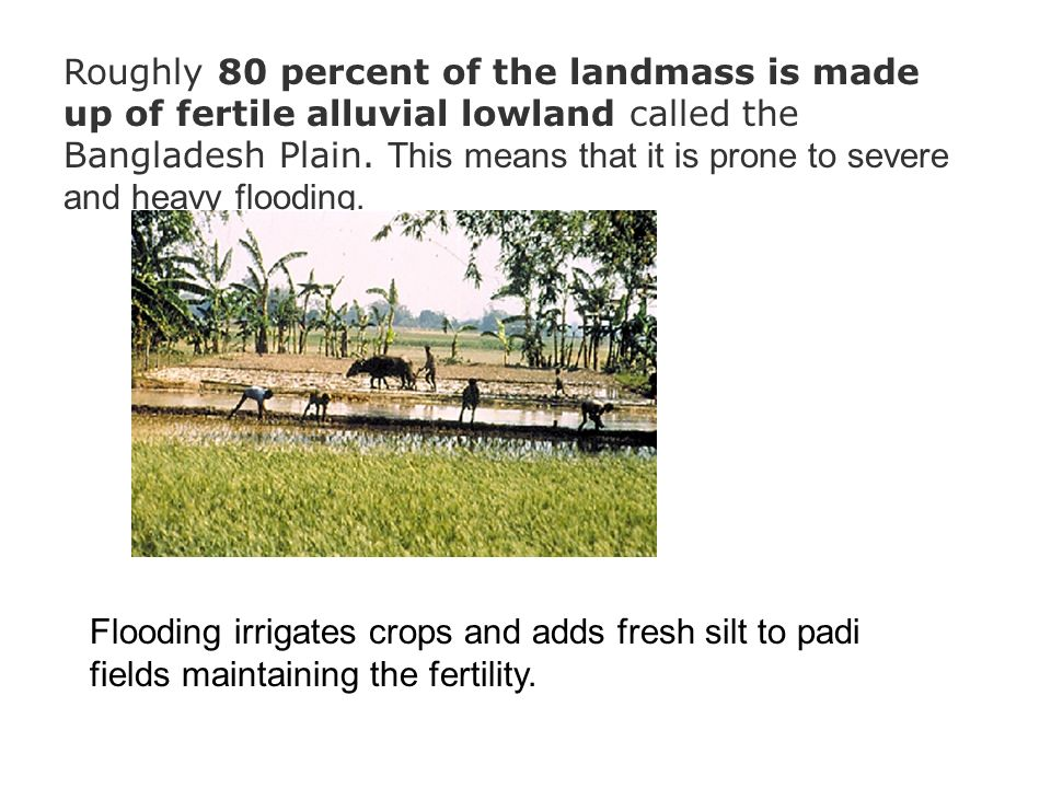 Roughly 80 percent of the landmass is made up of fertile alluvial lowland called the Bangladesh Plain. This means that it is prone to severe and heavy