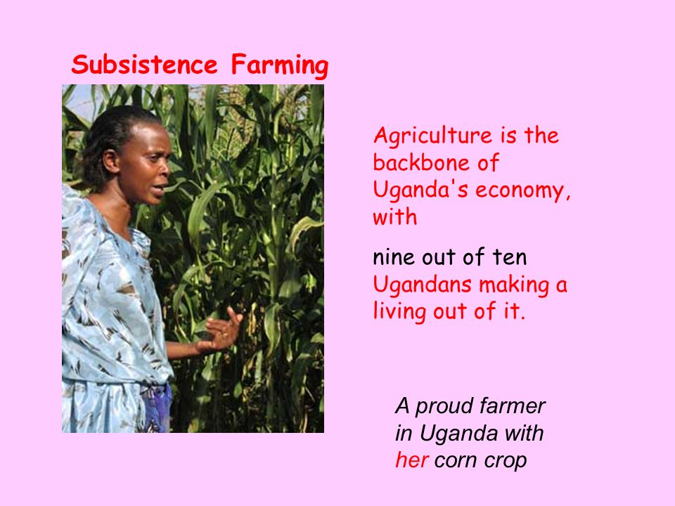 Agriculture is the backbone of Uganda s economy, with nine out of ten Ugandans making a living out of it.