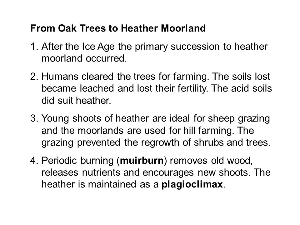 From Oak Trees to Heather Moorland 1.After the Ice Age the primary succession to heather moorland occurred. 2.Humans cleared the trees for farming. Th