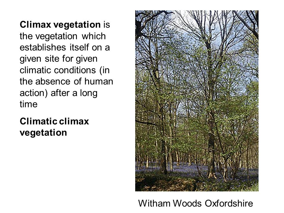 Climax vegetation is the vegetation which establishes itself on a given site for given climatic conditions (in the absence of human action) after a lo
