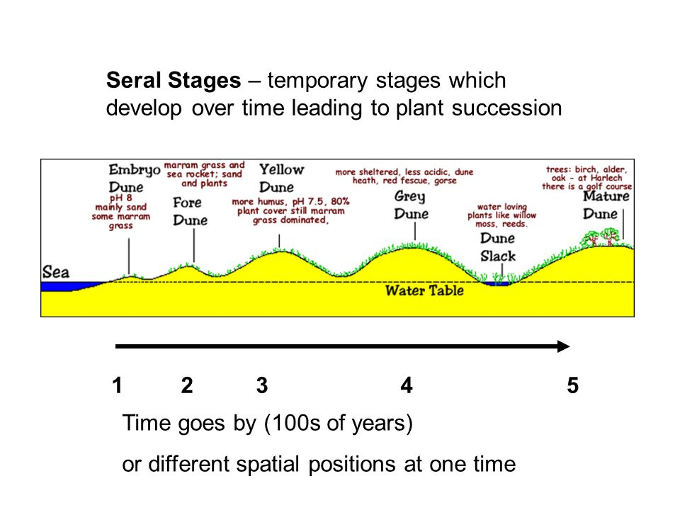 Seral Stages – temporary stages which develop over time leading to plant succession 12345 Time goes by (100s of years) or different spatial positions