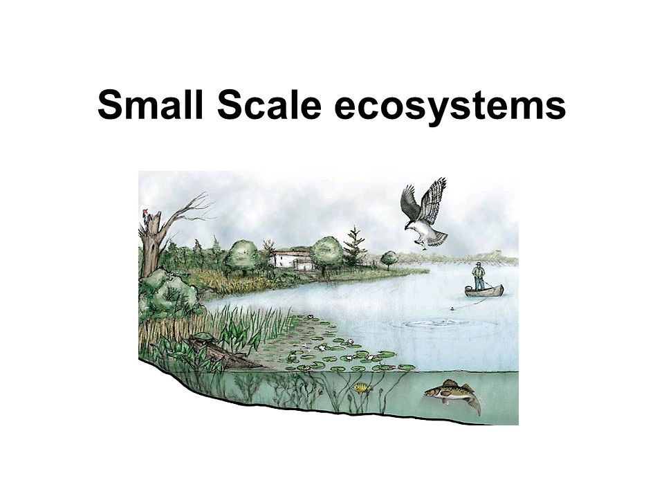 Small Scale ecosystems