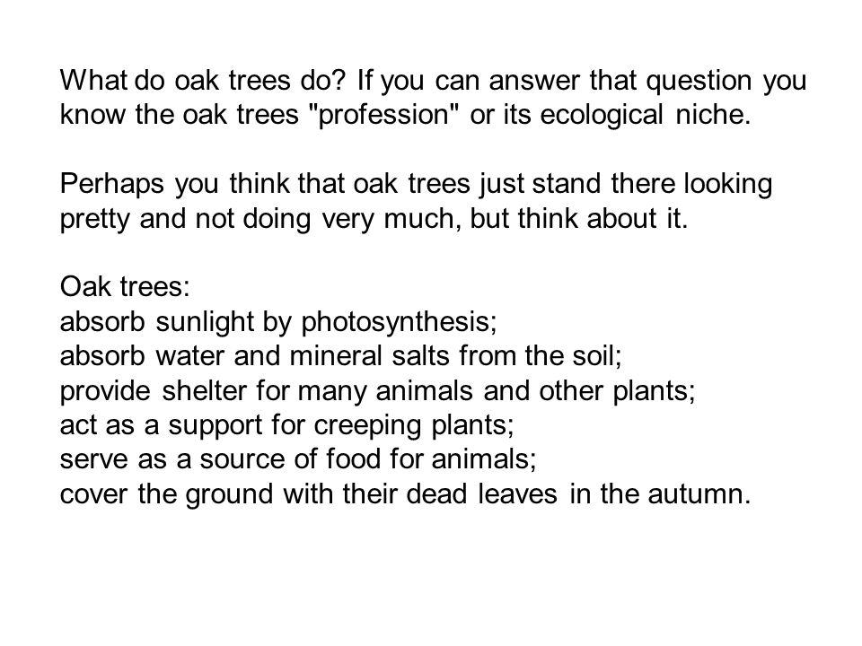 What do oak trees do? If you can answer that question you know the oak trees
