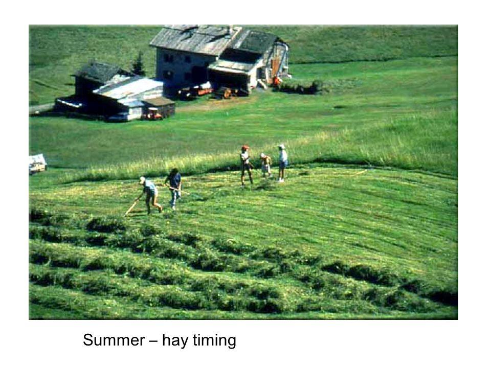 Summer – hay timing