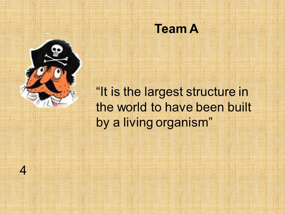 Team A It is the largest structure in the world to have been built by a living organism 4