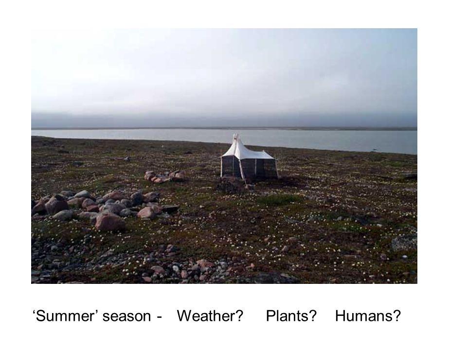 Summer season - Weather Plants Humans