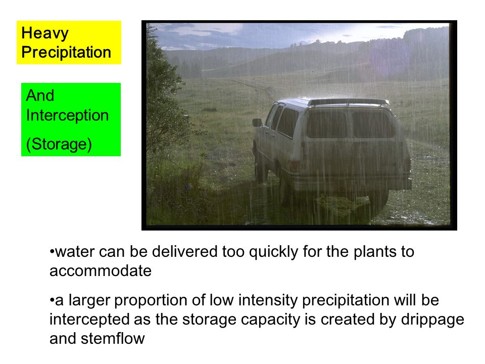 Interception Storage http://uregina.ca/~sauchyn/geog327/intercept.html Leaf cover / breaks fall Conifers and deciduous trees Interception slows water passage Leaf drip / stem flow More likely to infiltrate