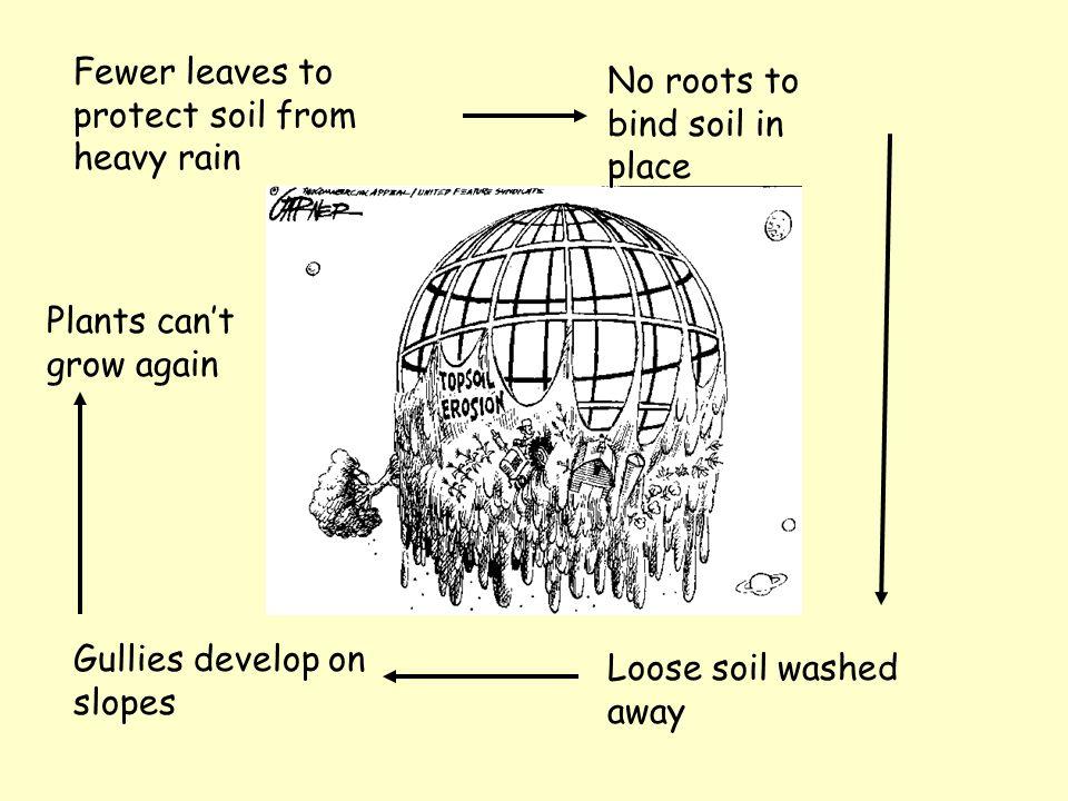Soil Leaves intercept rainwater Break power of falling rain Roots hold soil in place Fairly little soil erosion under natural forest