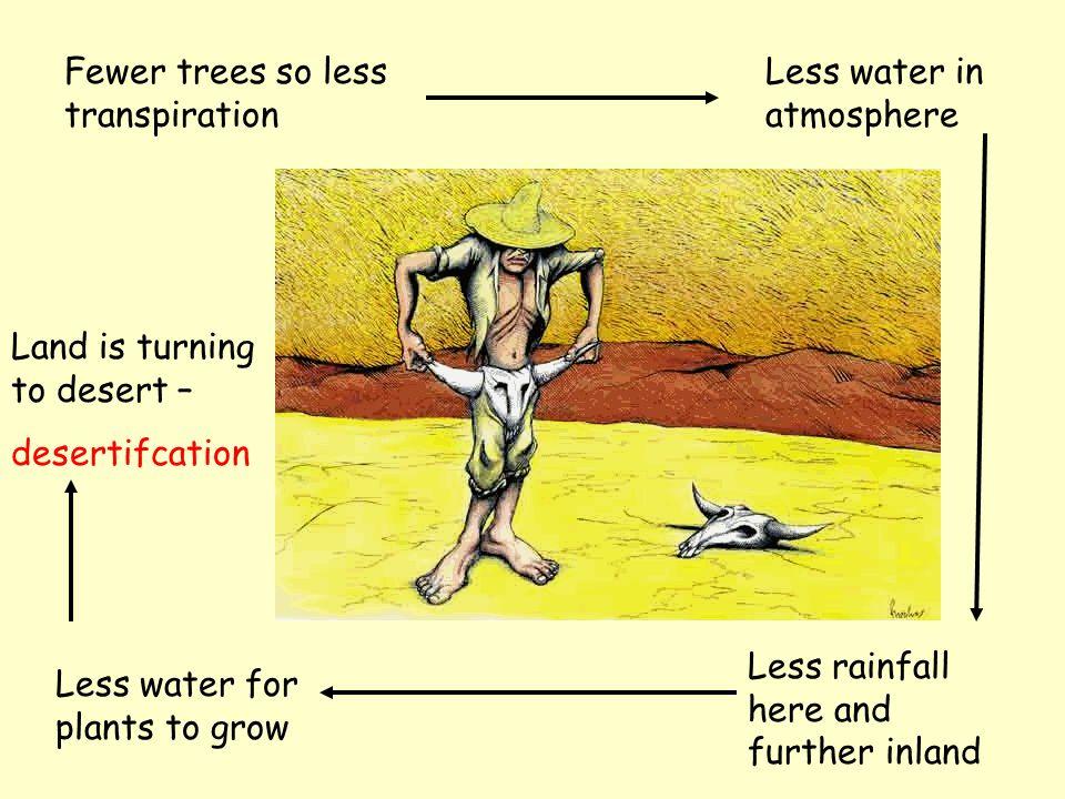 Local Climate Change Leaves intercept falling rain.