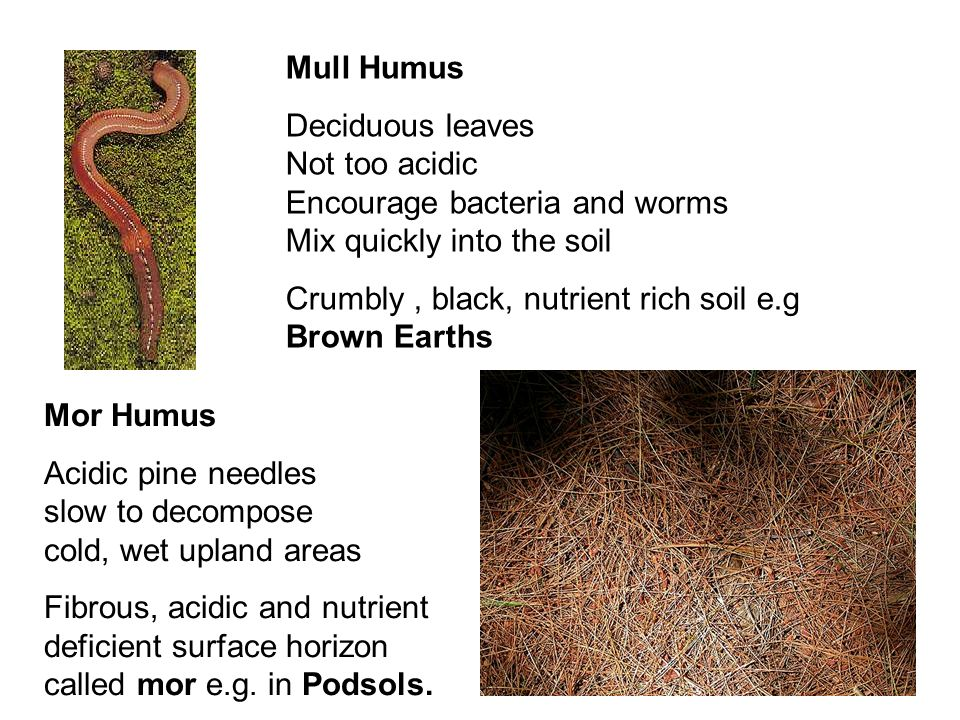 Mull Humus Deciduous leaves Not too acidic Encourage bacteria and worms Mix quickly into the soil Crumbly, black, nutrient rich soil e.g Brown Earths