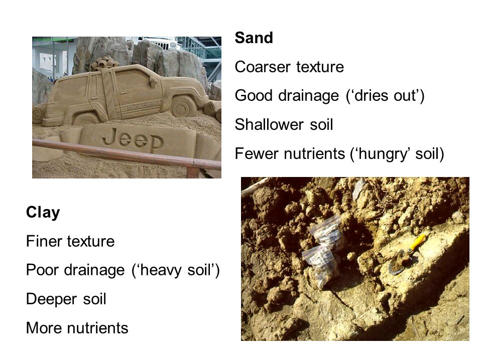 Sand Coarser texture Good drainage (dries out) Shallower soil Fewer nutrients (hungry soil) Clay Finer texture Poor drainage (heavy soil) Deeper soil