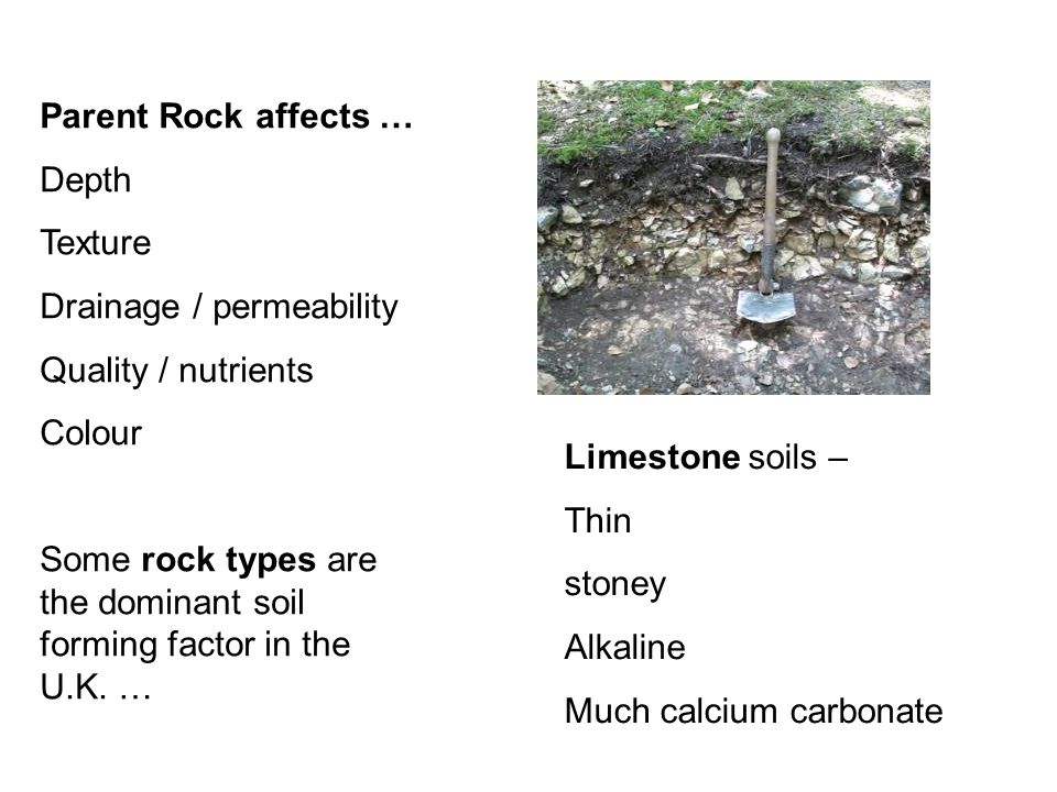 Parent Rock affects … Depth Texture Drainage / permeability Quality / nutrients Colour Some rock types are the dominant soil forming factor in the U.K