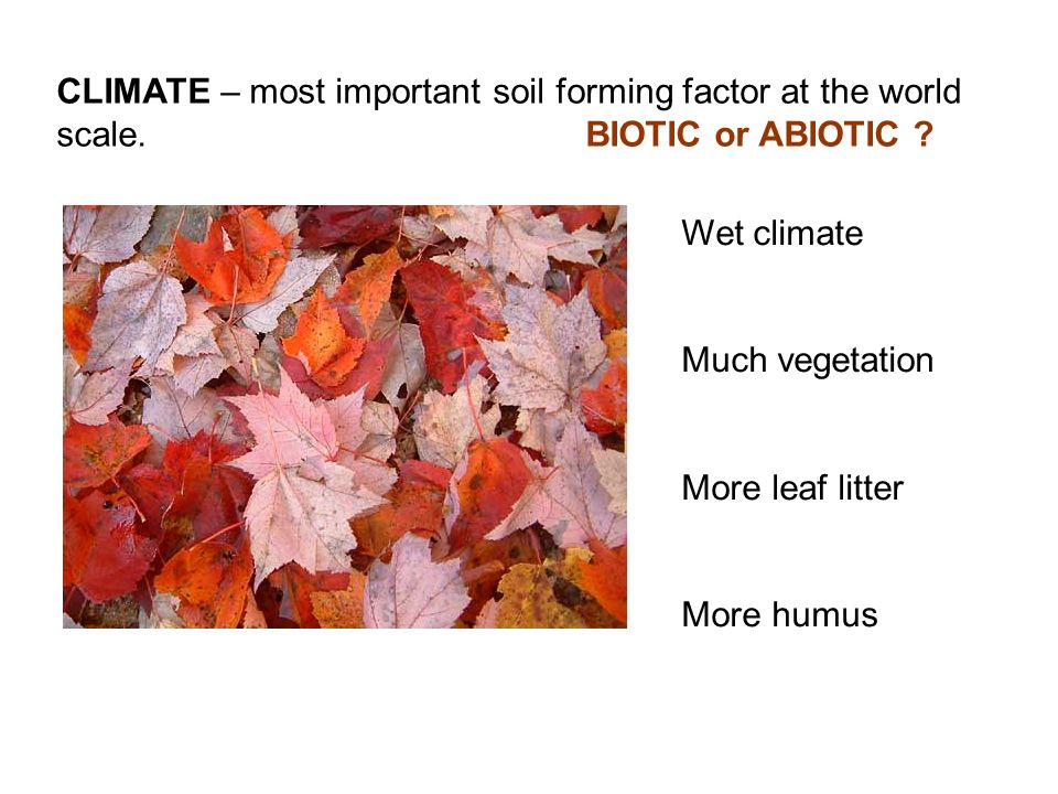 CLIMATE – most important soil forming factor at the world scale.BIOTIC or ABIOTIC ? Wet climate Much vegetation More leaf litter More humus