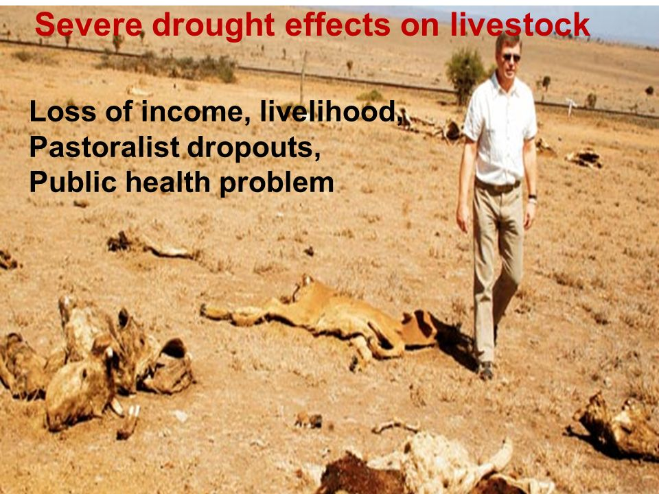 Severe drought effects on livestock Loss of income, livelihood, Pastoralist dropouts, Public health problem