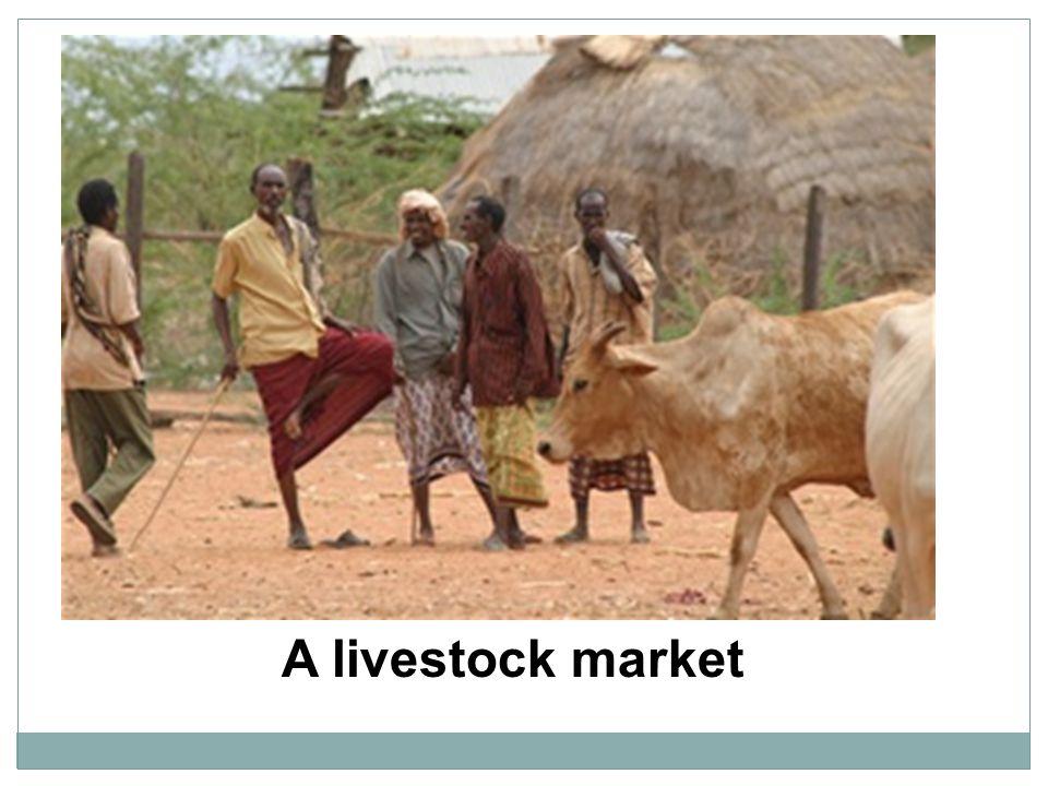 A livestock market