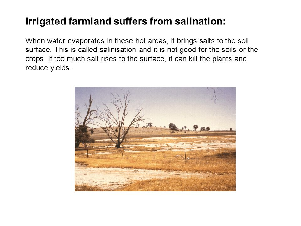 Irrigated farmland suffers from salination: When water evaporates in these hot areas, it brings salts to the soil surface. This is called salinisation