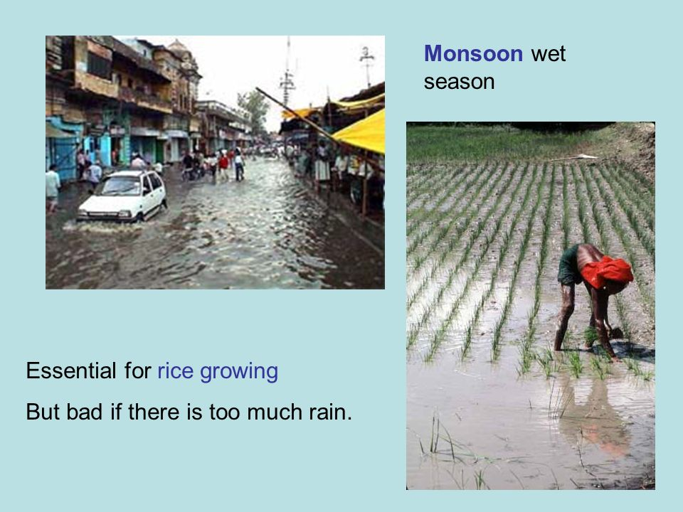 Monsoon wet season Essential for rice growing But bad if there is too much rain.