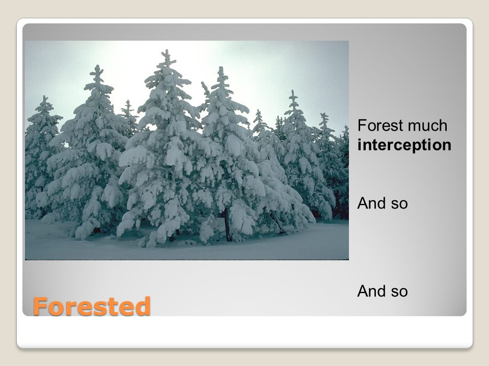 Forested Forest much interception And so