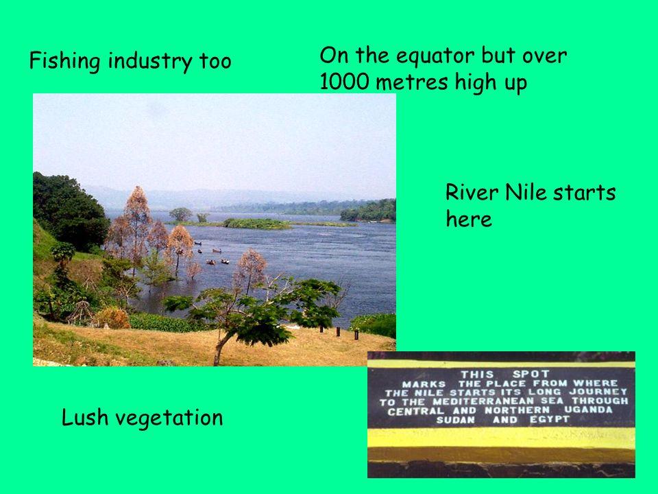Lake Victoria UGANDA – natural ecosystems