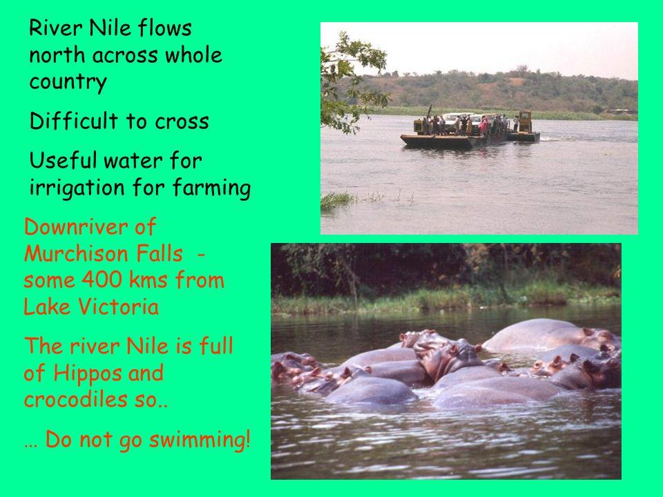 River Nile Flows northwards