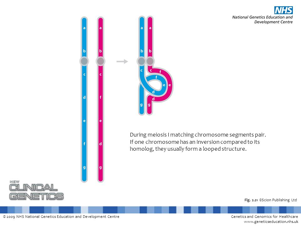 © 2009 NHS National Genetics Education and Development CentreGenetics and Genomics for Healthcare www.geneticseducation.nhs.uk Fig. 2.21 ©Scion Publis